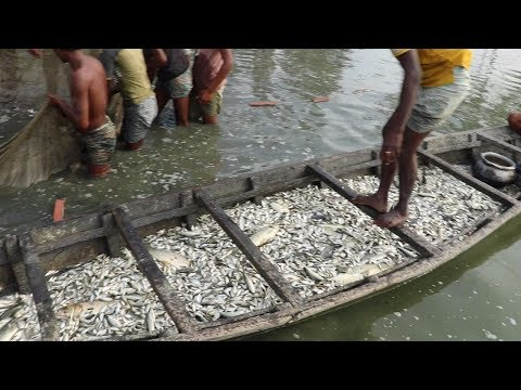 A Boat Is Filled With Fish & Fish | Unbelievable Fishing! Never Seen SO Much Fish In Your Life