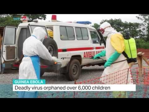 Derek Gatherer talks to TRTWorld on Ebola virus epidemic in Guinea