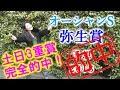 【競馬】土日3重賞完全的中!オーシャンステークスと弥生賞 2018 予想  ヨーコヨソー