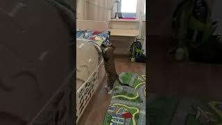 Прикольное видео с кошкой