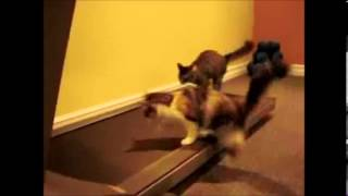 Video Funny Cats Compilation [Best scenes of all time] download MP3, 3GP, MP4, WEBM, AVI, FLV Juli 2018
