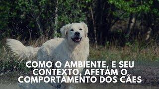 O impacto do ambiente e seu contexto no comportamento canino 🤔