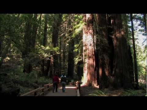 Muir Woods National Monument Tour ~ HD