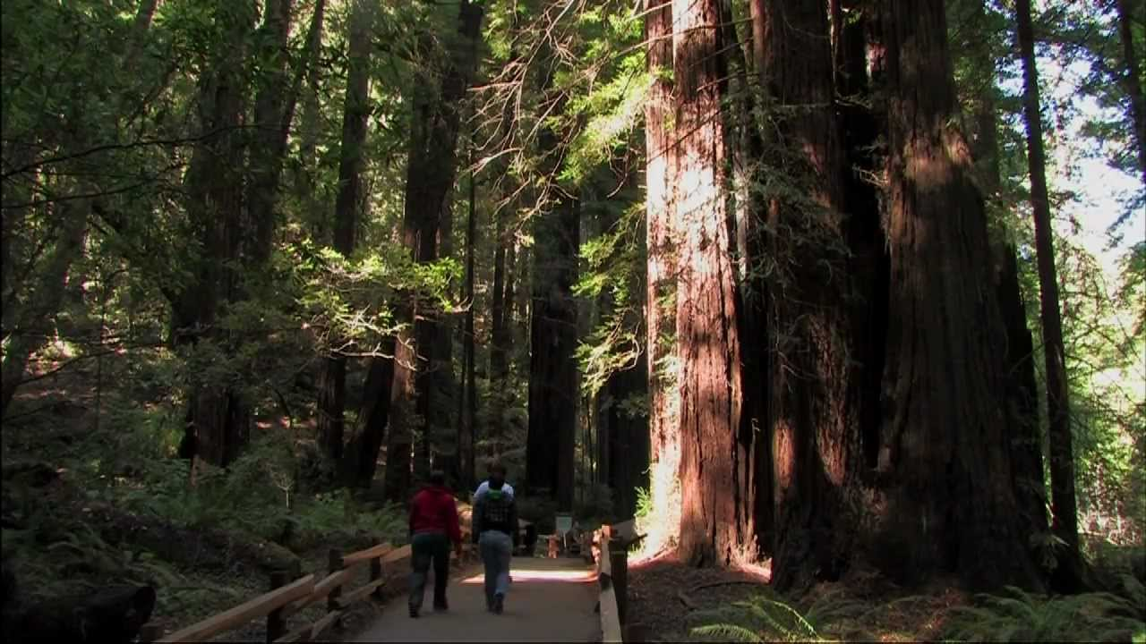 Muir Woods Tours From San Francisco Which Are Best