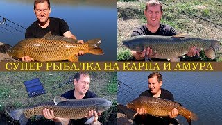 Супер рыбалка на крупного карпа и амура на пруду Разинский / Карпфишинг / Английский завтрак