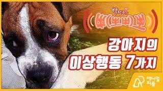 [박정윤의 '멍냥 삐뽀삐뽀' #10] 강아지의 이상행동 7가지