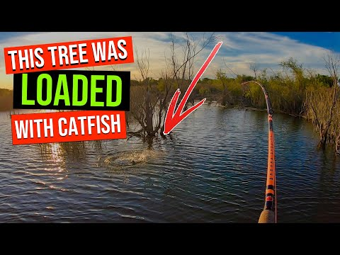 This Tree Was LOADED With Catfish (Every Cast)