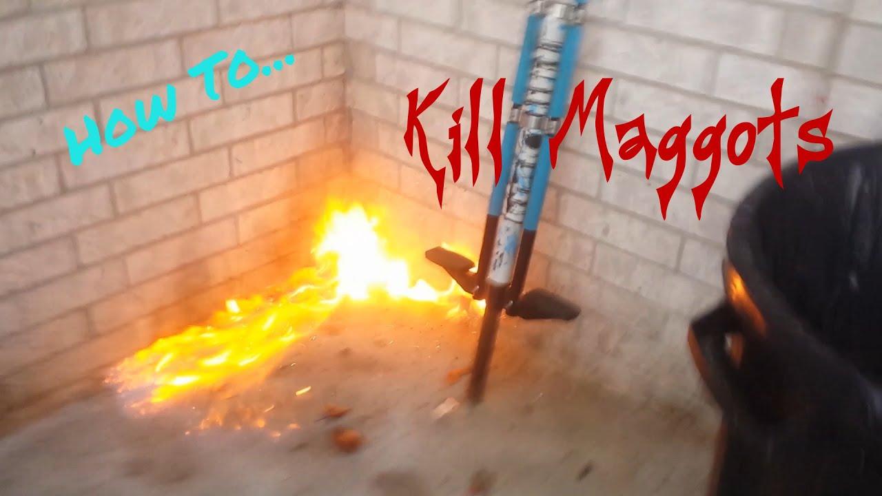 How to Kill Maggots  YouTube