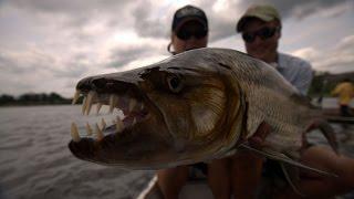 Рыбалка  Конго  Якуб Вагнер  часть 2. Рыбалка на рыб монстров.