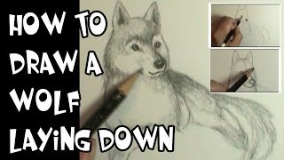 How to draw a wolf laying down