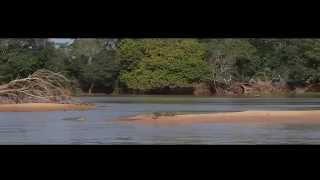 Охота ягуара на крокодила! - видео про животных.