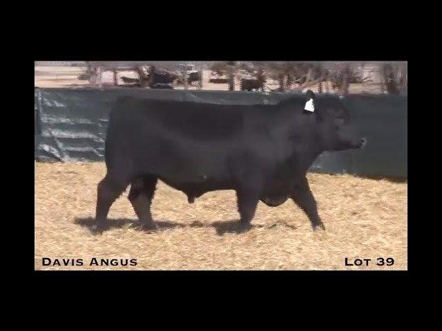 Davis Angus Lot 39