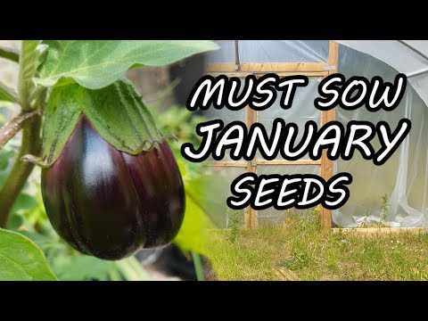 Three Seeds to Sow in January - Kicking Off the Gardening Year