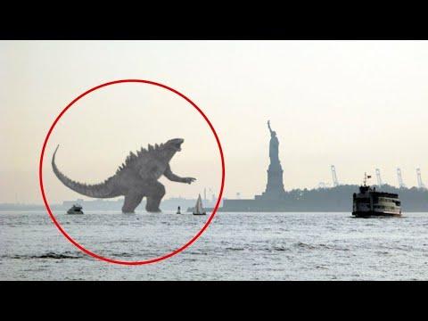 5 Godzilla Uhvacenih Kamerom U Stvarnom Zivotu