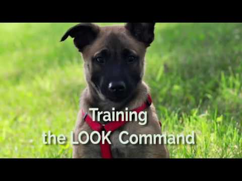 Training the Look Command