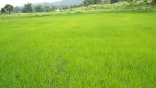 Download Malargalea Nathaswarangal MP3 song and Music Video