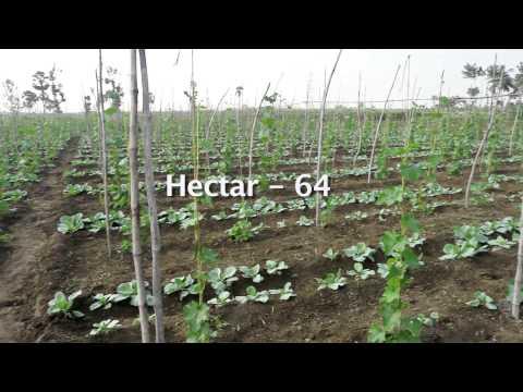 DOCUMENTARY ON ORGANIC FARMING