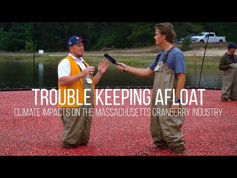 Cranberry Growers Are Having Trouble Keeping Afloat
