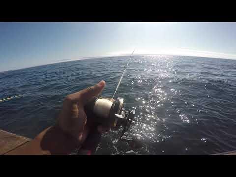 Channel Islands Rockfish Jigging