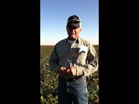 Ron Goebel in Organic Cotton Field