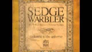 Sedge Warbler - Sand Kids