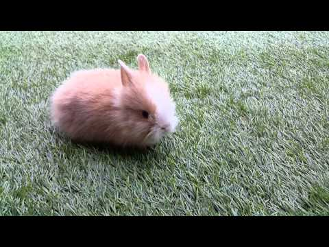Khách hàng và cơn sốt nuôi thỏ bọ part 9