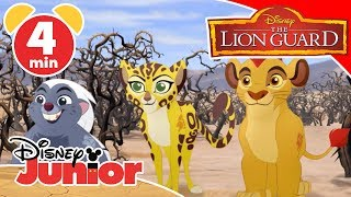 The Lion Guard | Magical Moment: Fire From The Sky ? | Disney Junior UK
