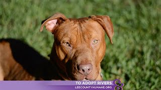 Adoption Ever After - Rivers - Home & Family