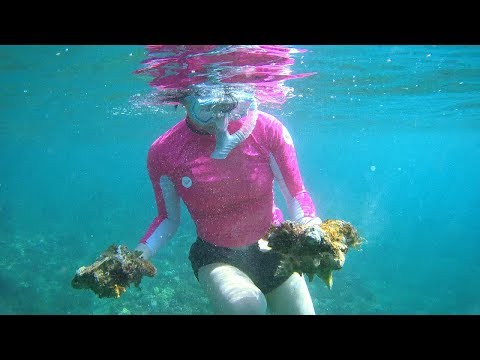 BVI  - Snorkeling on BVI Islands