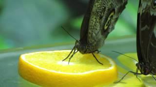 Тропические бабочки крупным планом