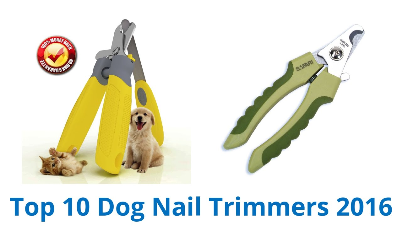 10 Best Dog Nail Trimmers 2016