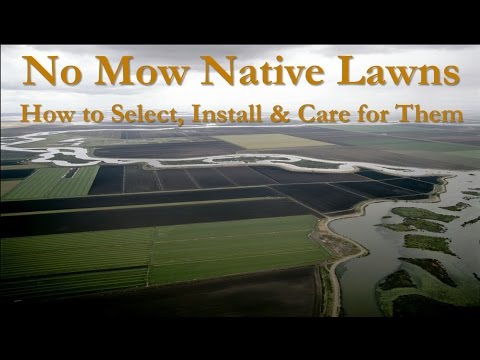 No Mow Native Lawns: How to Select, Install & Care for Them