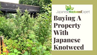 Download Lagu Buying A House With Japanese Knotweed -  Changes to the TA6 Form mp3