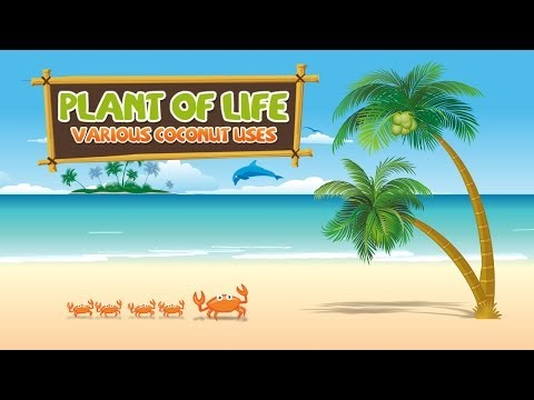 Amazing Uses of Coconut: The Plant of Life