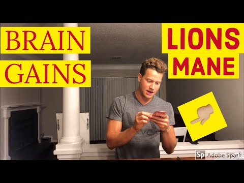 lions-mane-mushroom-review---best-natural-nootropic?