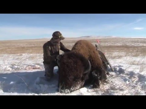 Bowhunt for Giant Buffalo (Warrior - Film) Buffalo Hunt