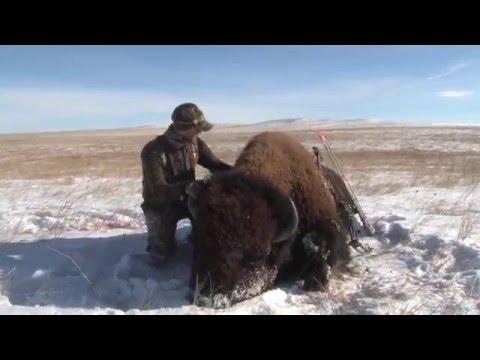 Bowhunt For Giant Buffalo (Warrior - Film) Buffalo Hunt