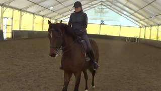 Конный спорт. выездка. Восьмерки. Прямолинейность движения лошади.