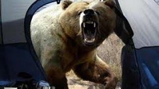 Нападение медведей на людей. Слабонервным не смотреть!