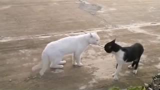 ТОП самых смешных видео про кошек. Смех до слез!!!™