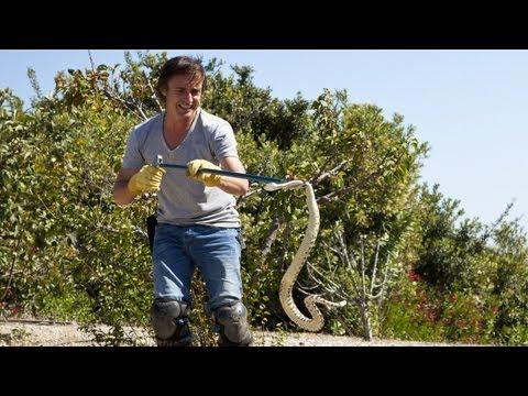 Richard Hammond: Exotic Animals + Snake-Wrangler! CRASH COURSE New Dec 3 BBC America