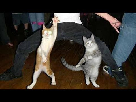 Funny dancing cats and dogs - Cute animal compilation