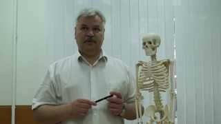 БОЛИ В РУКЕ (Болит рука? Невролог подробно разъясняет о причинах боли в руке)(Врач-невроог М.М. Шперлинг (г. Новосибирск) в своей медицинской лекции