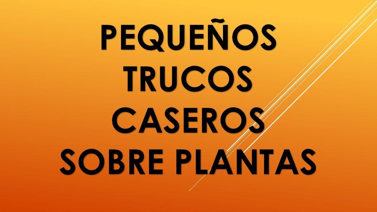 Trucos plantas de interior jardiner a viyoutube for Trucos jardineria