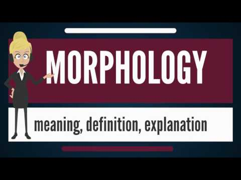 What is MORPHOLOGY? What does MORPHOLOGY mean? MORPHOLOGY meaning, definition & explanation