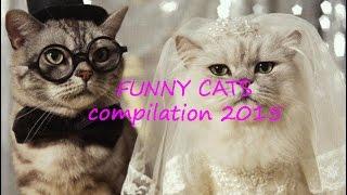 Funny Cats 2015, ржачные кошки