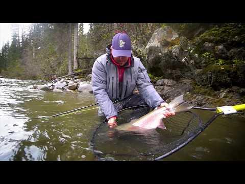 Swinging For Steelhead - Fishing The Upper Skeena