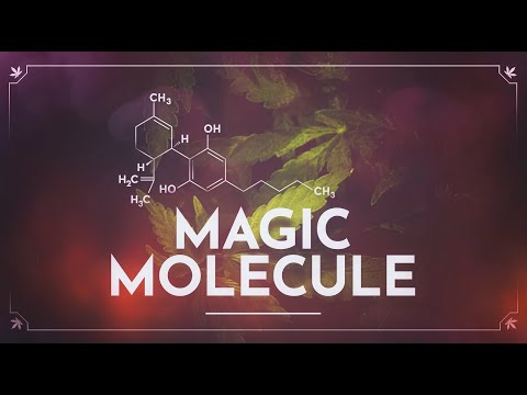 CBD: The Magic Molecule OFFICIAL TRAILER