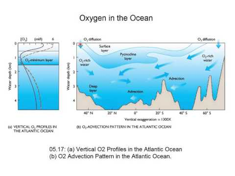 Oxygen And Carbon In The Ocean