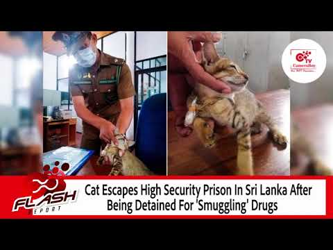 Cat Escapes Maximum Security Prison After Being Detained For 'Smuggling Drugs'